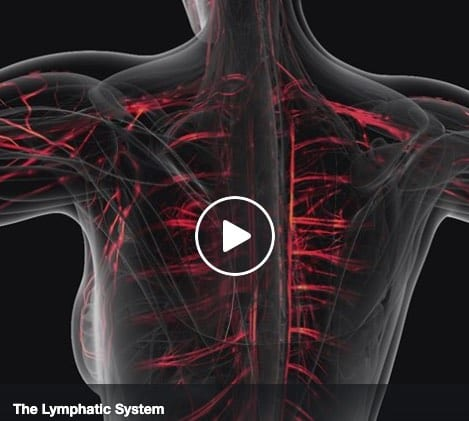 The Lymphatic System drains toxins from your body and protects you against diseases.